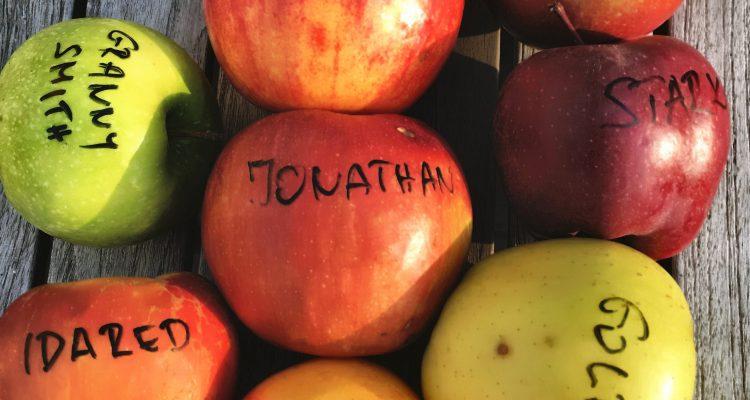 alma ezernyi változatban