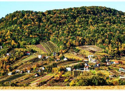 Határon túli borok a Sziszi-kertben