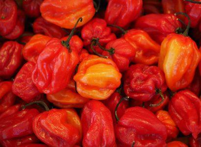 Chiliből is van már magyar evőverseny