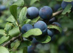 4 őszi bogyó, amivel nagyot alkothatsz