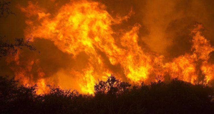 Pokoli tűz pusztítja Kalifornia szőlőit