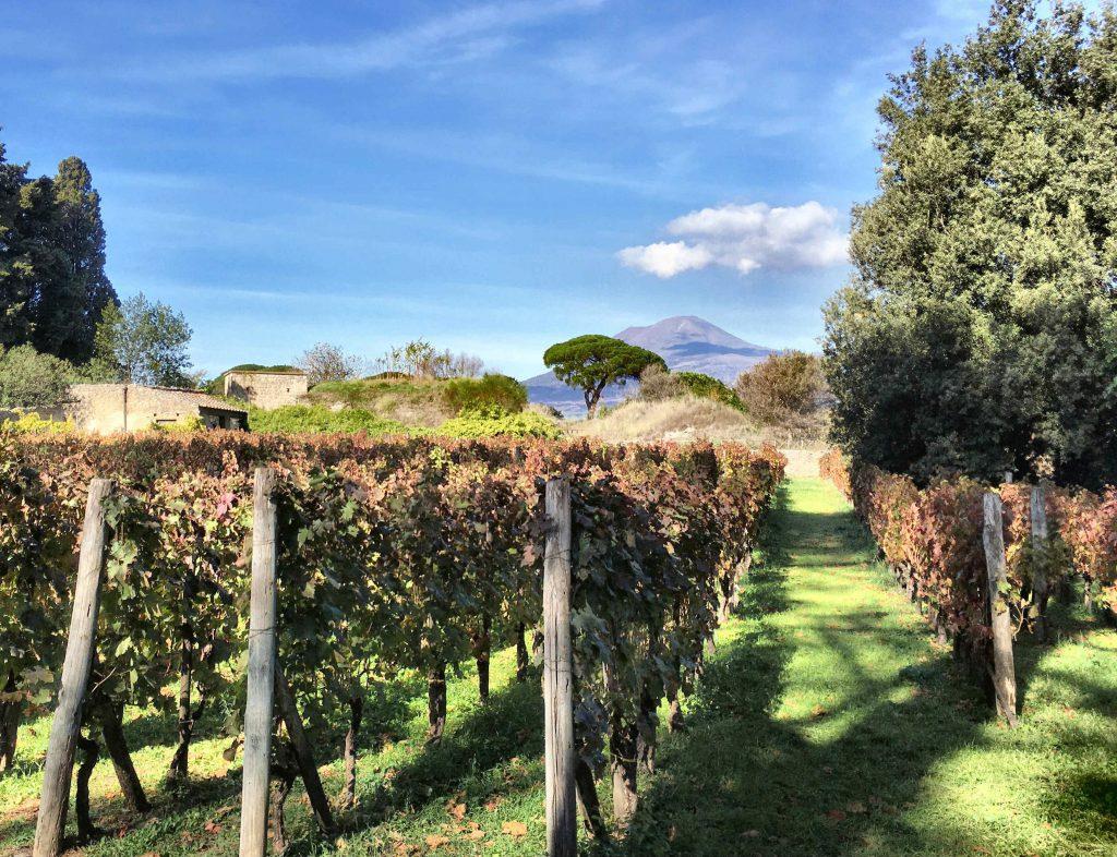 a Villa dei Misteri szőlői Pompei-ben